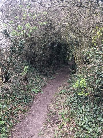 photo of route through woods