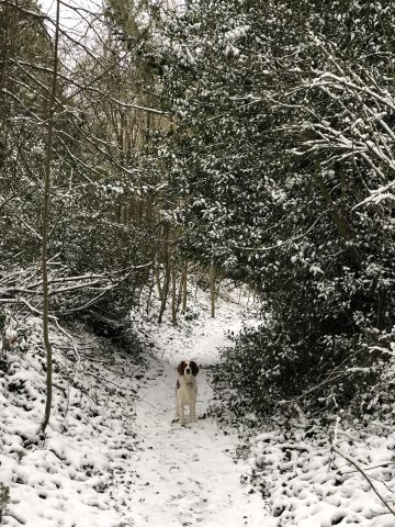dog on snowy footpath