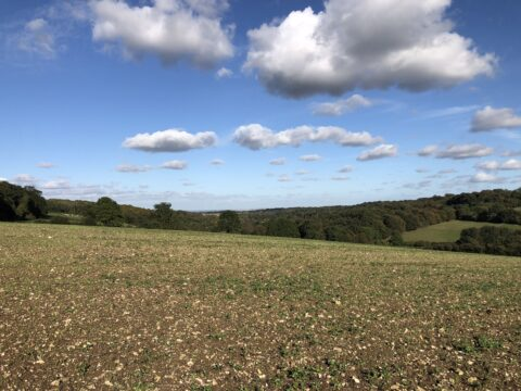 farmed fields and distant view with blue sky